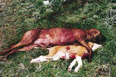 Massacre de staffs Massacre3gd