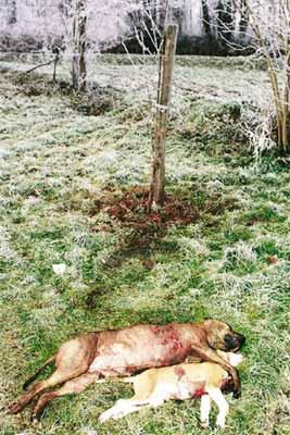 Massacre de staffs Massacre5gd
